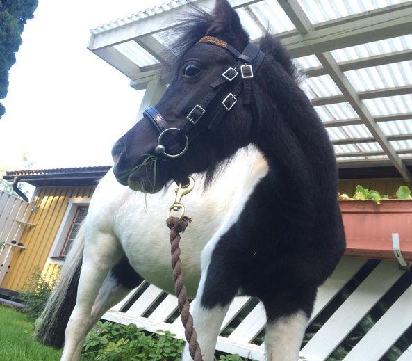 Världens bästa häst <3 <3 <3 <3 <3 <3