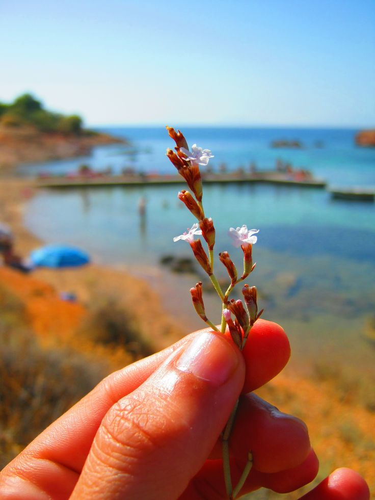 summer flower - Greece-