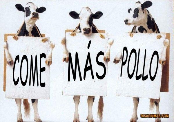 Las vacas recomiendan...  Recomendaciones, sugerencias. Imperativo.