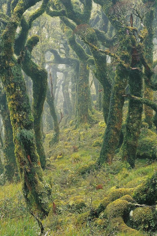 Tararua Forest, New Zealand by Rob Brown
