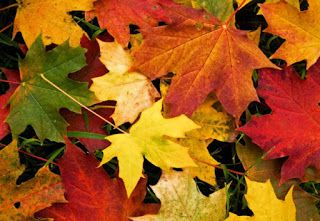 Fascinanta lume a naturii: Adaptarea frunzei la mediu