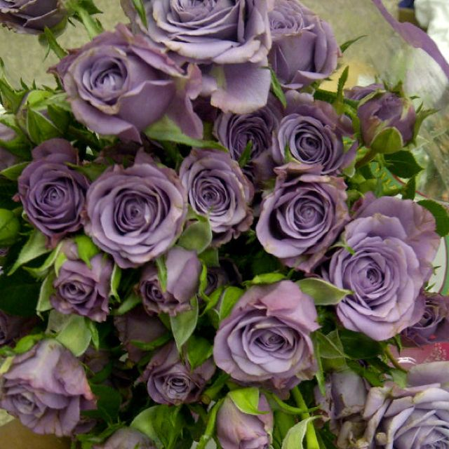 Lavender follies spray roses: all year | FLOWERS Roses ...