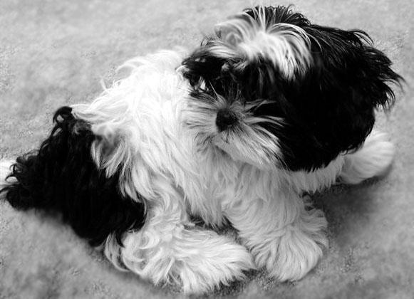 Kleine Hunderassen Mit Bildern Kutya