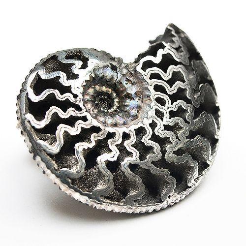 Pyrite Ammonite [Kosmoceras sp.]