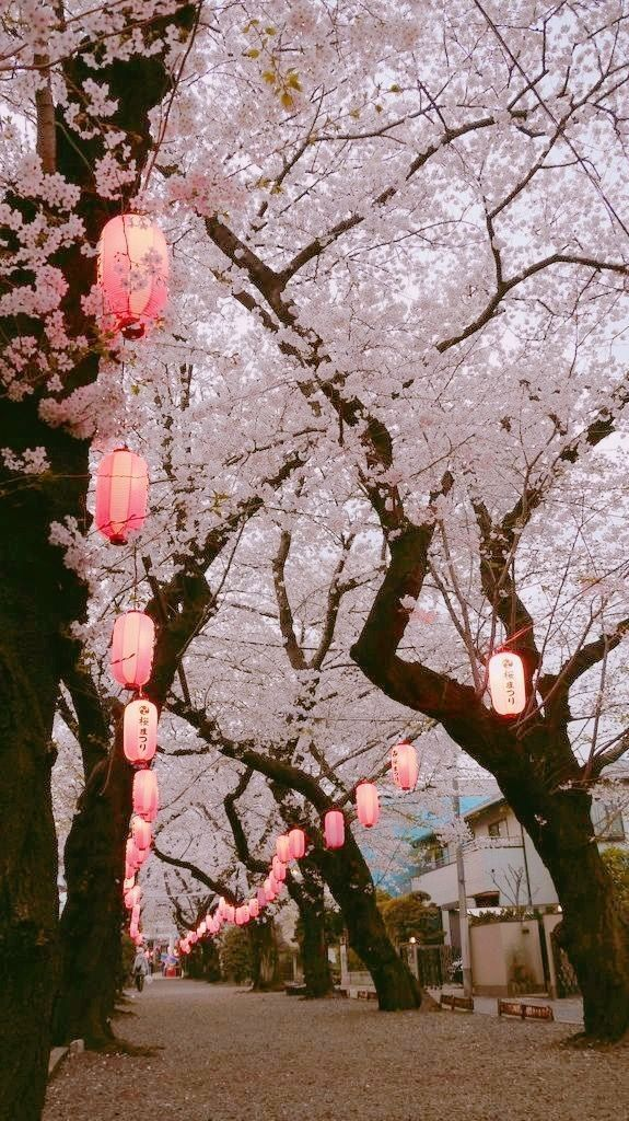 12cc Text Fic Violet 7 Flowers Photography Beautiful Nature Aesthetic Japan Autumn cherry blossom wallpaper