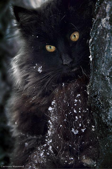 Beautiful Black Cat | mostlycatsmostly.tumblr.com