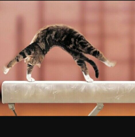 Cat doing back bend kick over on the beam I just wanna say CUTE