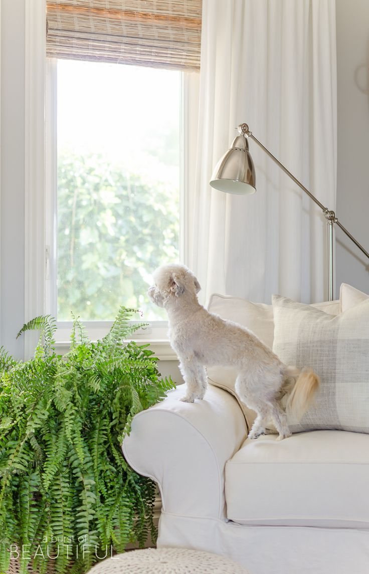 17 best images about drapes window treatments on for Modern farmhouse window treatments