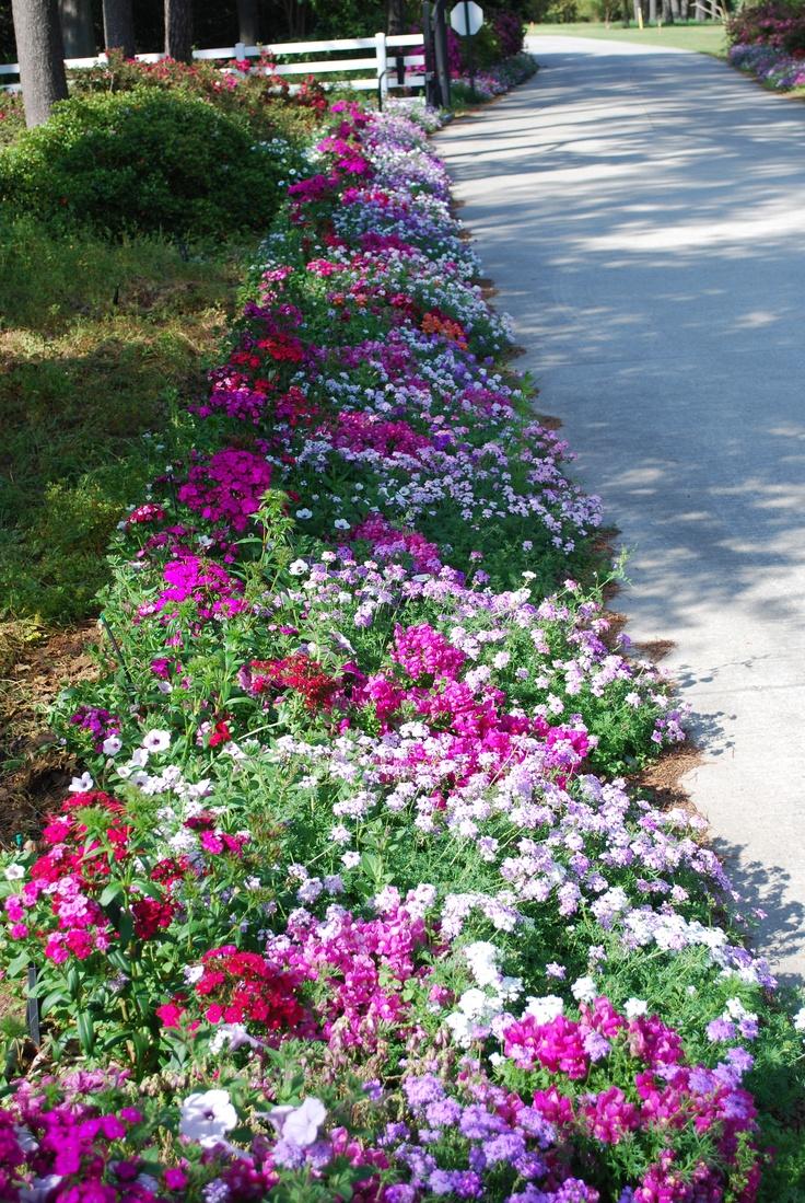 36 best lsu botanic gardens at burden images on pinterest