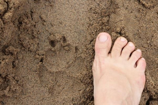 Fresh hyena 'spoor' which is Afrikaans for animal tracks.