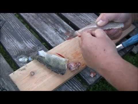 Video for å lære å rense abbor. Abbor er vel en av de fiskene som lettest biter på kroken. Smaken av sprøstekt abbor er for meg mye bedre enn ørret og annen innlands fisk.  Les mer om tilberedning av abbor på http://minituren.blogspot.no/2013/07/abbor-er-enkelt-fiske-og-lett-og.html