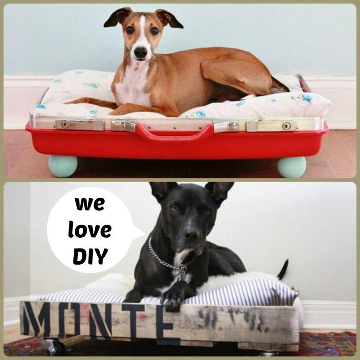 KSHOP MOOD: DIY WE  riciclo creativo! #Pallet e vecchie valige che diventano comodi lettini #faidate per i nostri amici a quattro zampe (non solo cani eh) #dogs #cats #pet #design #cardboard #DIY #kshop #mobili #cartone #sostenibile #arredamento #furniture