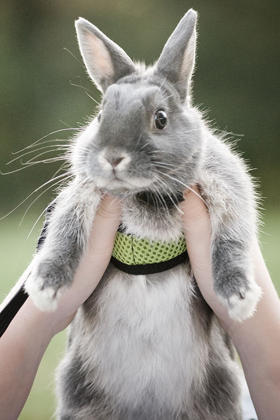 17 Best Images About Cute Bunnies On Pinterest Animales