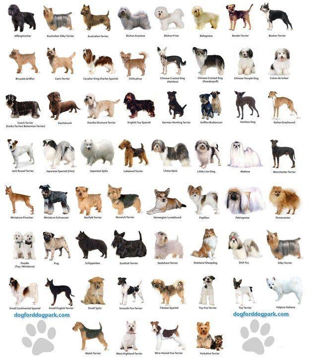 E conhece todos as raças de cães que existem. | 16 indícios de que sua vida é incompleta por não ter um cachorro