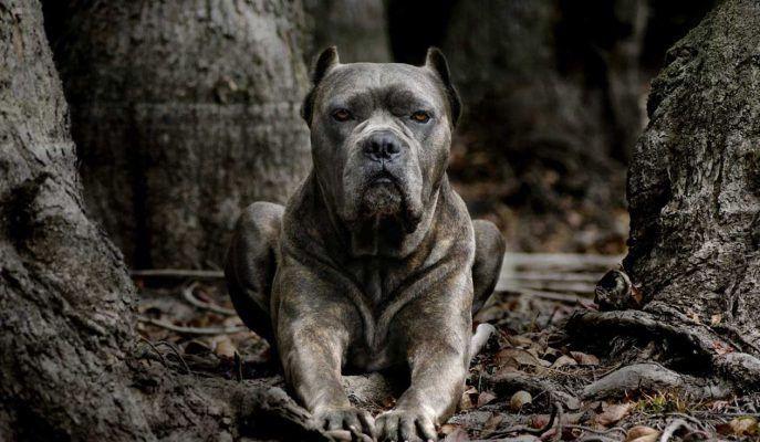 https://flic.kr/p/TnRNwX | Dünyanın En Tehlikeli 25 Köpek Irkı İçinizdeki Kaçma Hissini Uyandıracak | Dünyanın en tehlikeli köpek ırkları hakkında ne kadar bilginiz var? Hazırladığım bu galerimde dünyanın en tehlikeli köpek ırklarına değinmek istedim. Göz atmanızı öneririm: paratic.com/en-tehlikeli-kopek-turleri/
