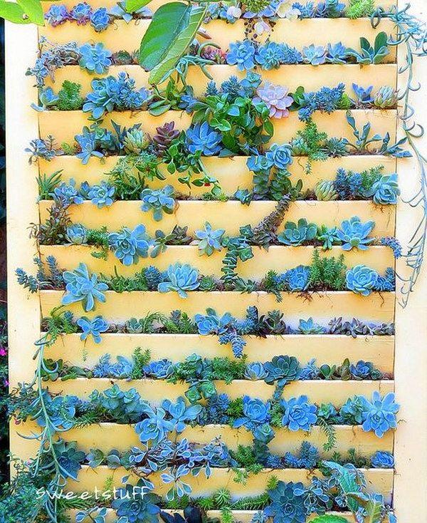 Plant Succulents In Old Shutter Door.