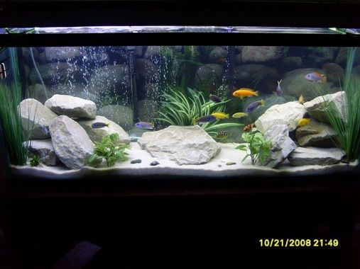 Updated 55 Gal Lake Malawi Cichlids White Filtration Sand Drainage Rocks  Fake Plants from Michaels