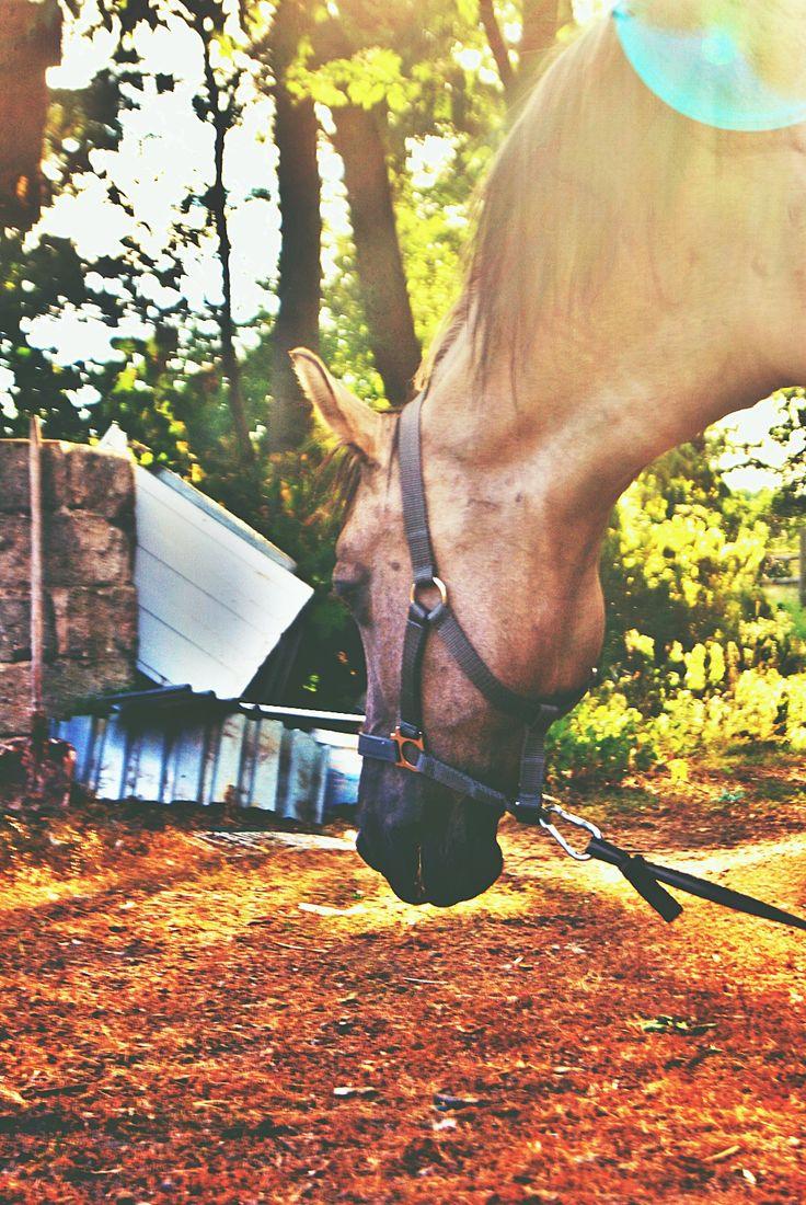 #summer #summerinspiration #summerinsaddle #horse