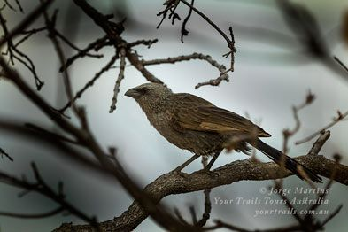 Bird life at Cape York, Queensland, Australia