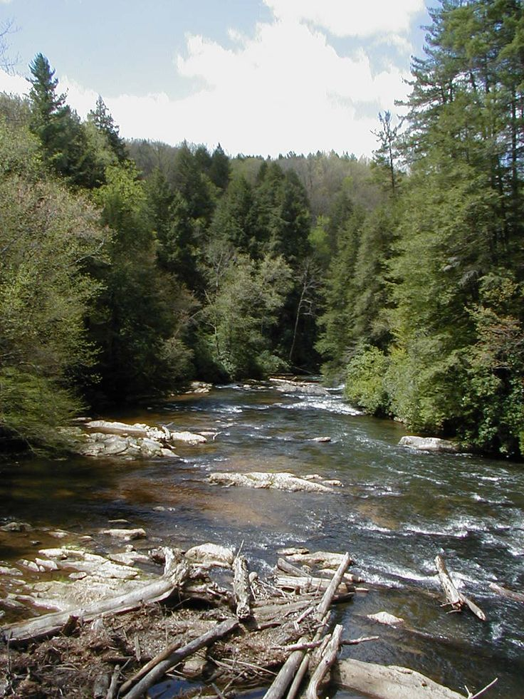 Toccoa river in beautiful blue ridge ga blue ridge for Fly fishing blue ridge ga
