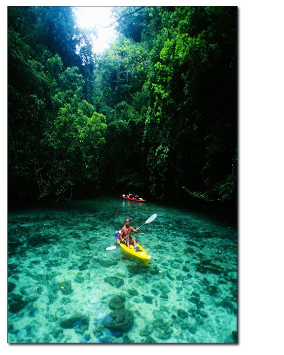 Palau Islands - one of the most biodiversity habitats in the world