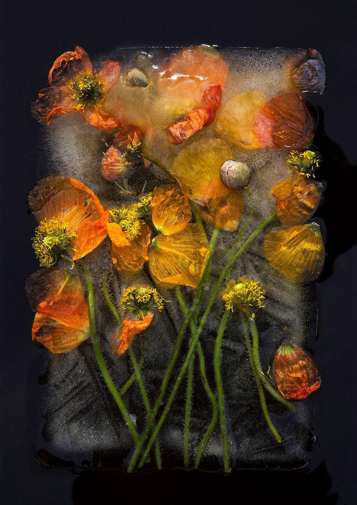 O fotógrafo Bruce Boyd e a artista Tharien Smith criaram esta linda série chamada 0°, feita com arranjos de flores congelados.           |via
