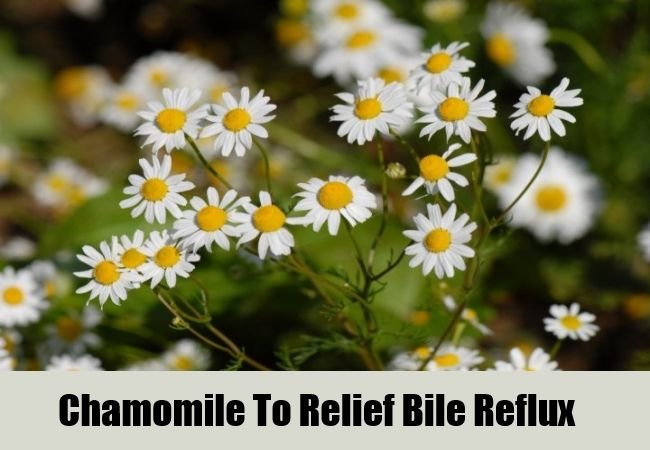 4 Herbal Remedies For Bile Reflux | http://www.searchhomeremedy.com/herbal-remedies-for-bile-reflux/