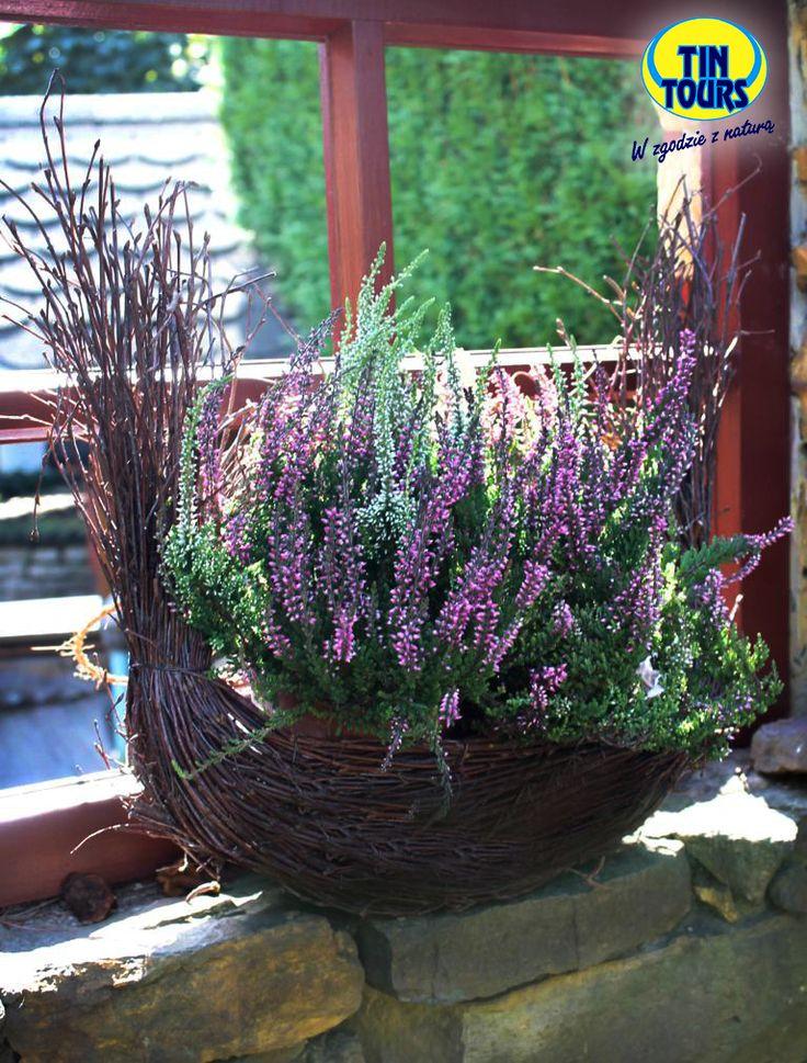 Kosz wypleciony z gałązek brzozy w kształcie gondoli obsadzony wrzosem - naturalna dekoracja do ogrodu.