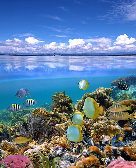 Under the waters in Fiji - I want to go here