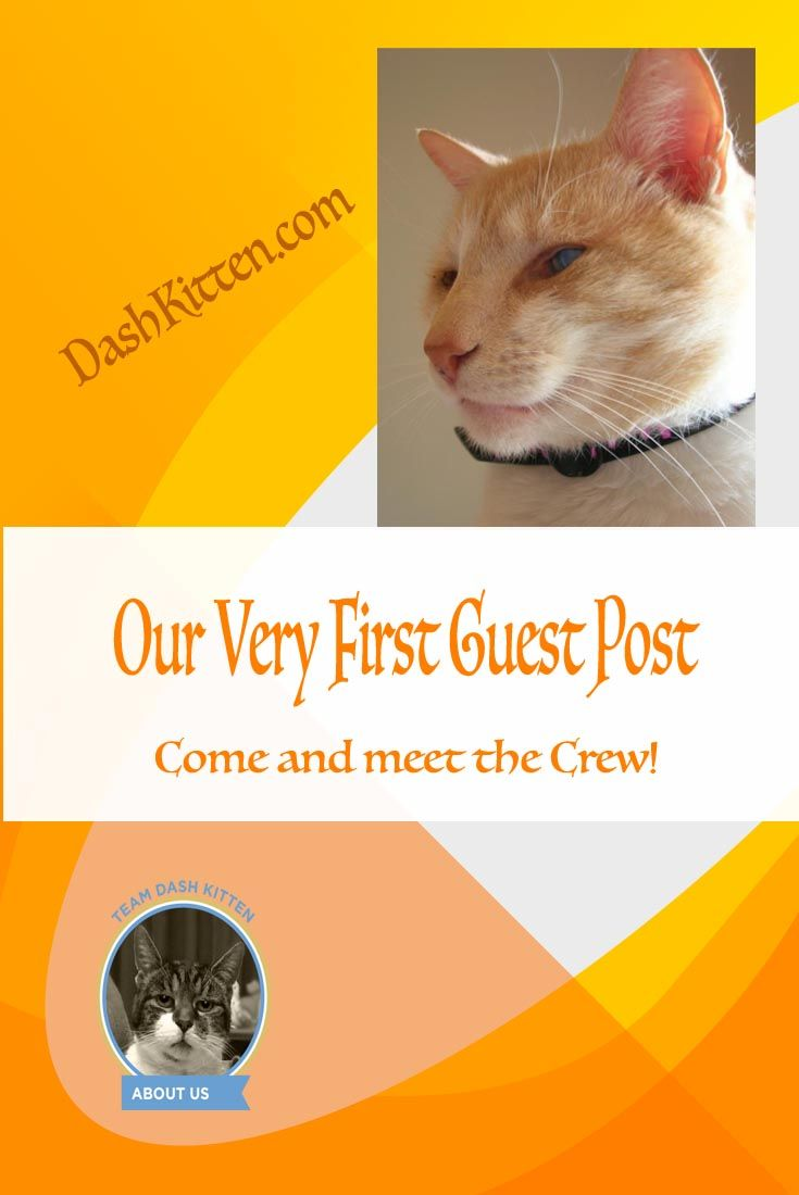 We are SO proud! Come and meet the Dash Kitten Crew at our guest post on Kings River Life magazine.   For cool rescue and animals stories this is one of our favourites so come and check us out!