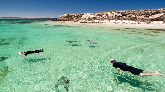Swimming with sea lions, Baird Bay Ocean Eco Experience Baird Bay, Eyre Peninsula. Picture: SATC/John Montesi