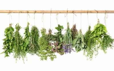 come conservare le erbe aromatiche: consigli e metodi