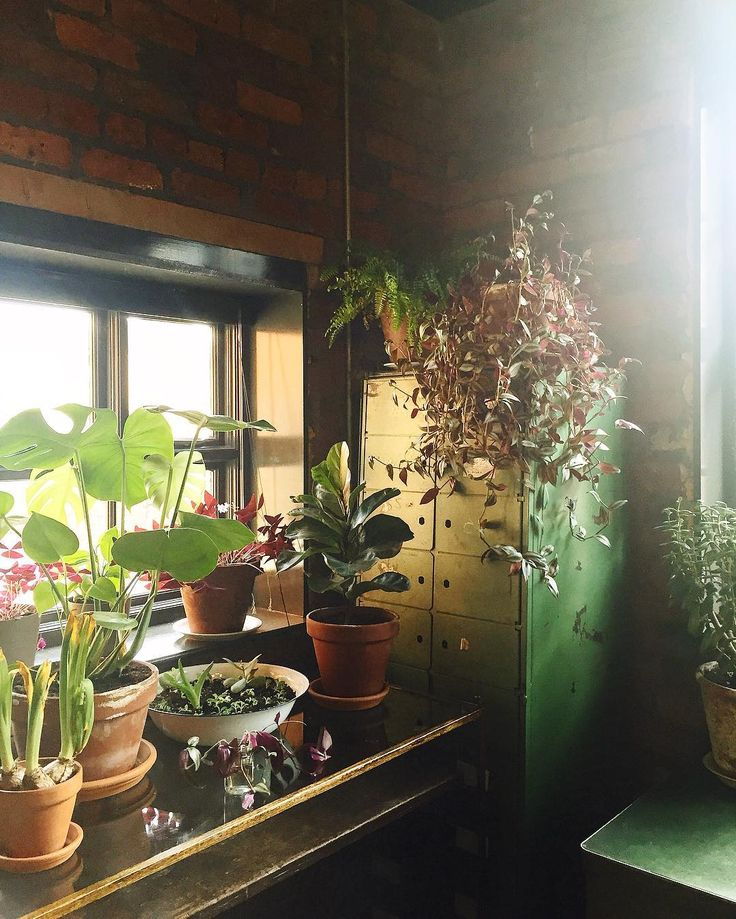 The plant-filled corners of @twohousetales with all the big-hitters: #Monstera #FiddleLeafFig and #Tradescantia