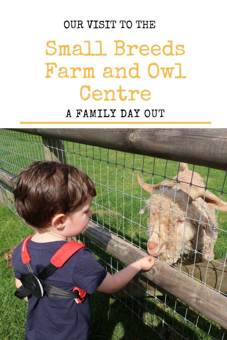 small breeds farm and owl centre