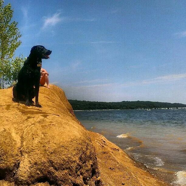Toby watching sailboats.
