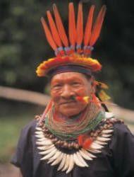 23 best images about Amazon Rainforest on Pinterest | South ...