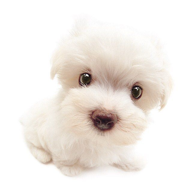 100+ Cutest Pictures That Will Make You Want A Puppy ASAP - SeeCrush #cute #puppy #puppies #dogslover | Cute dogs, puppies, Cute dog pictures, Dogs, puppies