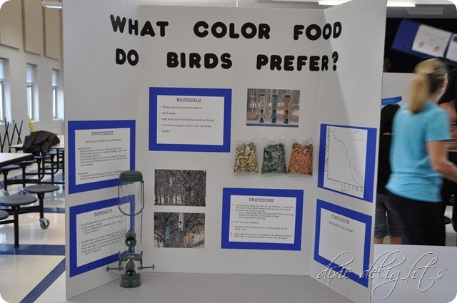 What Color Food Do Birds Prefer Family Pinterest