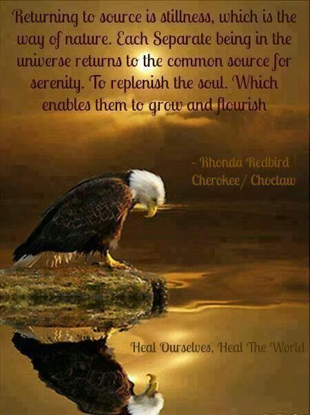 455 best images about animal spirit guides on pinterest
