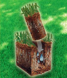 Lawn Aeration removes cores of soil from the ground reducing the turf compaction which increases the infiltration of water and nutrients for a stronger healthier root system. A strong root system is the key to a thick lush lawn. Thousands of small openings created by the aeration provide just what your lawn needs.