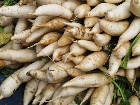 Culture du panais (pastinaca sativa) au jardin potager