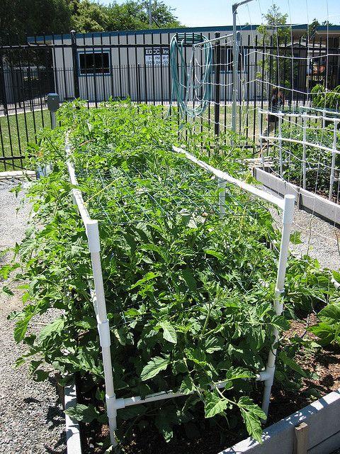387 Best Urban Garden   Trellis   Tomato   Peas   Beans Images On Pinterest    Gardening, Garden Trellis And Plants