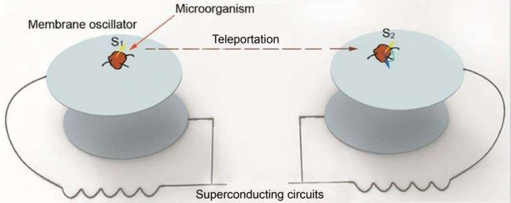 """{   PHYSICISTS PROPOSE THE FIRST SCHEME TO TELEPORT THE MEMORY OF AN ORGANISM   }   #PHYS.Org ..... """"Quantum teleportation between two microorganisms is shown. The internal state (an electron spin) or the center-of-mass motion state of a microorganism on an electromechanical oscillator can be teleported to a remote microorganism on another electromechanical oscillator assisted with superconducting circuits."""".....  http://phys.org/news/2016-01-physicists-scheme-teleport-memory.html#jCp"""