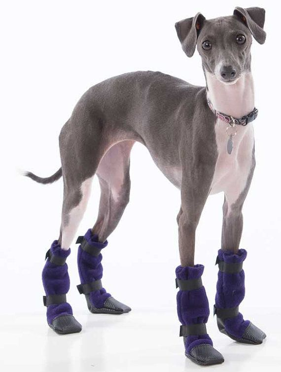 Protect your dogs paws from road salt, snow, ice and sharp objects with our Italian Greyhound Booties. Our slipper style Italian Greyhound