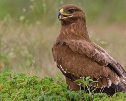 In Haryana we can see this type of birds.