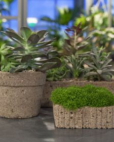 Concrete planters for succulents!