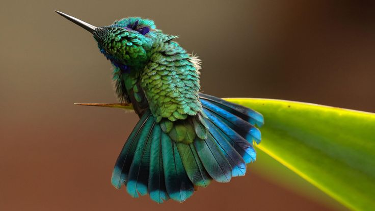 Audubon Photography Awards - Fine Art Winner #PetNook