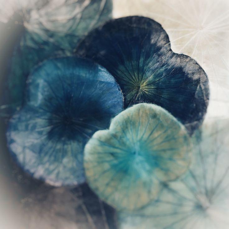 Heute Mit Fokus; Kühles Blau.