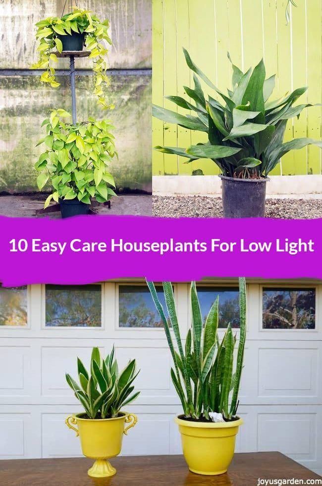 634 Best The Joy Us Garden Blog Images On Pinterest A 400 x 300