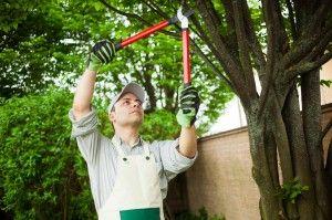 Comment élaguer un arbre : toutes les astuces et conseils !